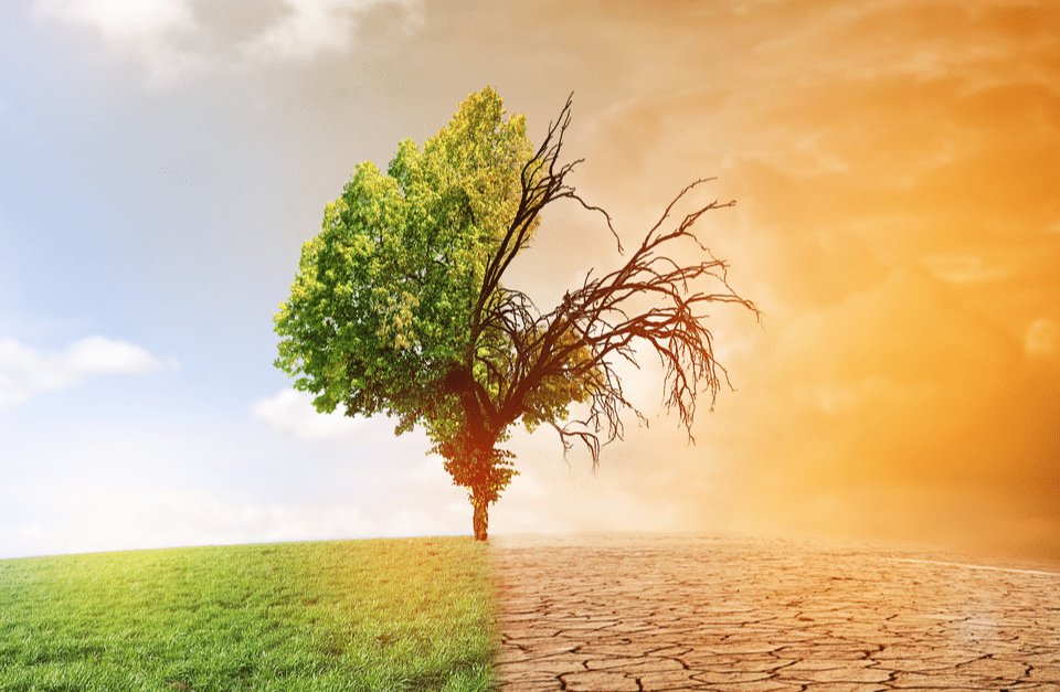 ICCP Report Is Ultimate Climate Change Wake-Up Call
